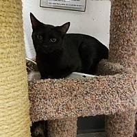 Adopt A Pet :: Onyx - Phoenix, AZ