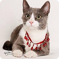 Adopt A Pet :: Baby - Riverside, CA