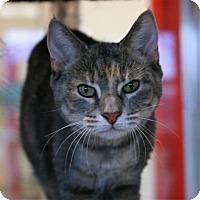 Adopt A Pet :: Camelot - Toms River, NJ