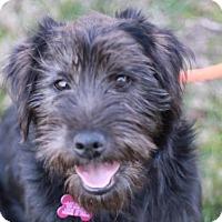 Adopt A Pet :: Fritz - ADOPTION IN PROGRESS - Nanuet, NY