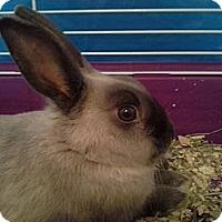 Adopt A Pet :: Dancer - Conshohocken, PA