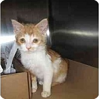 Adopt A Pet :: Sophie - Simms, TX