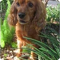 Adopt A Pet :: Bryce - Sugarland, TX