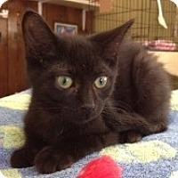 Adopt A Pet :: Ramses - Byron Center, MI