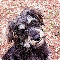 Adopt A Pet :: Scout - San Antonio, TX