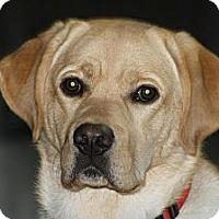 Adopt A Pet :: Henry - Scottsdale, AZ