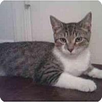 Adopt A Pet :: Allegro - Reston, VA