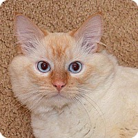 Adopt A Pet :: Sundance Kid - Davis, CA
