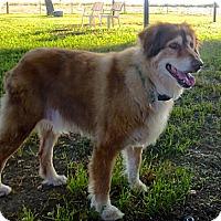 Adopt A Pet :: Hobbes - Petaluma, CA