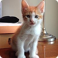 Adopt A Pet :: Makadi - St. Louis, MO