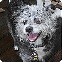 Adopt A Pet :: Tony - Umatilla, FL