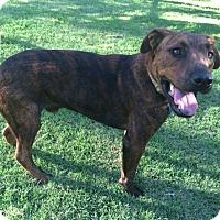 Adopt A Pet :: IKE - El Cajon, CA