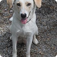 Adopt A Pet :: Lala - Oakland, AR