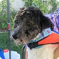 Adopt A Pet :: Harley - North Ogden, UT