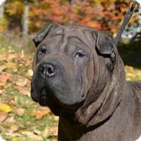 Adopt A Pet :: Mateo - Newport, VT