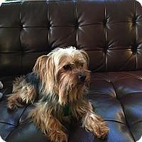 Adopt A Pet :: Chip - Austin, TX