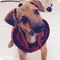 Adopt A Pet :: Stevie - Avon, NY