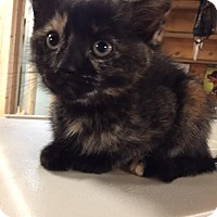 Adopt A Pet :: Kelly - Ortonville, MI