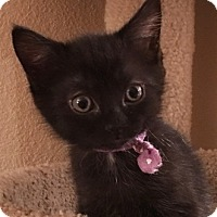 Adopt A Pet :: RavenW - North Highlands, CA
