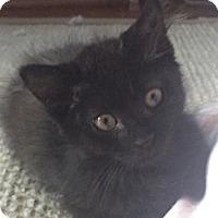 Adopt A Pet :: Kipu - Oakland Park, FL
