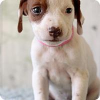 Adopt A Pet :: Mali - Waldorf, MD
