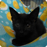 Adopt A Pet :: Joey - Quincy, CA