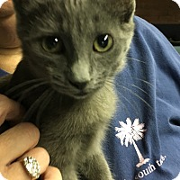 Adopt A Pet :: Lillie - Butner, NC