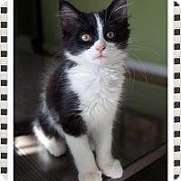 Adopt A Pet :: Ava - Mt. Prospect, IL