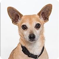 Adopt A Pet :: Maxwell - San Luis Obispo, CA
