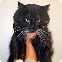 Adopt A Pet :: Joker - Wildomar, CA