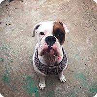 Adopt A Pet :: Roscoe - DeForest, WI