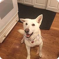 Adopt A Pet :: Hanson - Beverly Hills, CA