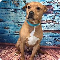 Adopt A Pet :: Kona - Hibbing, MN
