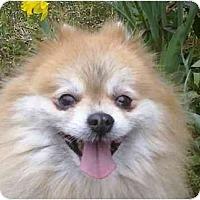 Adopt A Pet :: Louise - Gum Spring, VA