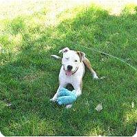 Adopt A Pet :: Buddy - Alliance, NE