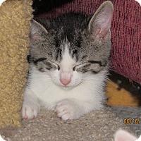 Adopt A Pet :: Laurelei - Southington, CT