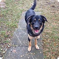 Adopt A Pet :: Chief - Caledon, ON