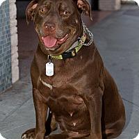 Adopt A Pet :: MISTY - Carpenteria, CA
