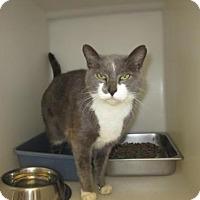 Adopt A Pet :: KGAC - 'Maria' - Dahlgren, VA