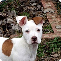 Adopt A Pet :: Tatinka - Harriman, TN