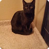 Adopt A Pet :: Mocha Chocolatta - Phoenix, AZ