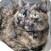 Adopt A Pet :: Girly Girl - Fort Leavenworth, KS