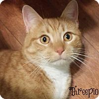 Adopt A Pet :: Threepio - Covington, KY