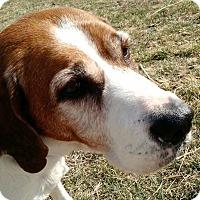 Adopt A Pet :: Buddy - Macomb, IL