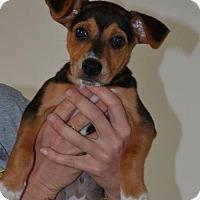 Adopt A Pet :: Blaze - Washington, DC