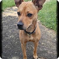 Adopt A Pet :: Zero - Shippenville, PA
