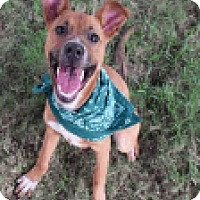 Adopt A Pet :: Mary-Ann - Fort Collins, CO