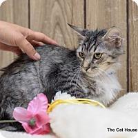 Adopt A Pet :: Kitten 14002 - Parlier, CA