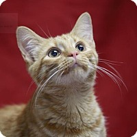 Adopt A Pet :: Cheesy - Kettering, OH