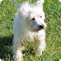 Adopt A Pet :: Dixon - Brunswick, ME